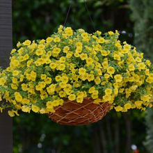 Load image into Gallery viewer, Calibrachoa Yellow