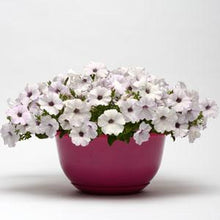 Load image into Gallery viewer, Petunia Easy Wave® Silver