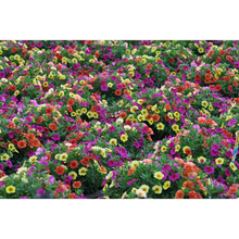 Load image into Gallery viewer, Confetti Garden Hawaiian Kalani