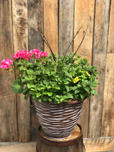 Load image into Gallery viewer, Patio Pot Sun Mix #1