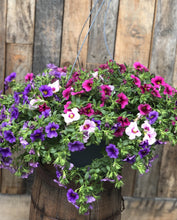 Load image into Gallery viewer, Calibrachoa Mix Basket
