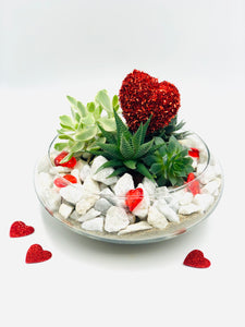 Small Bowl Terrarium