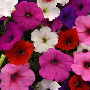 Petunia Easy Wave® Formula Mix