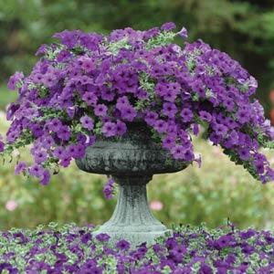 Petunia Easy Wave® Blue