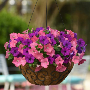 Petunia Easy Wave® Opposites Attract Mix