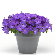Load image into Gallery viewer, Petunia Easy Wave® Lavender Sky Blue