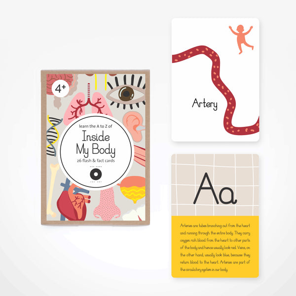 Fact & Flash Cards - Inside My Body