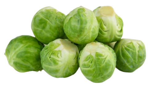 Brussel Sprout - #