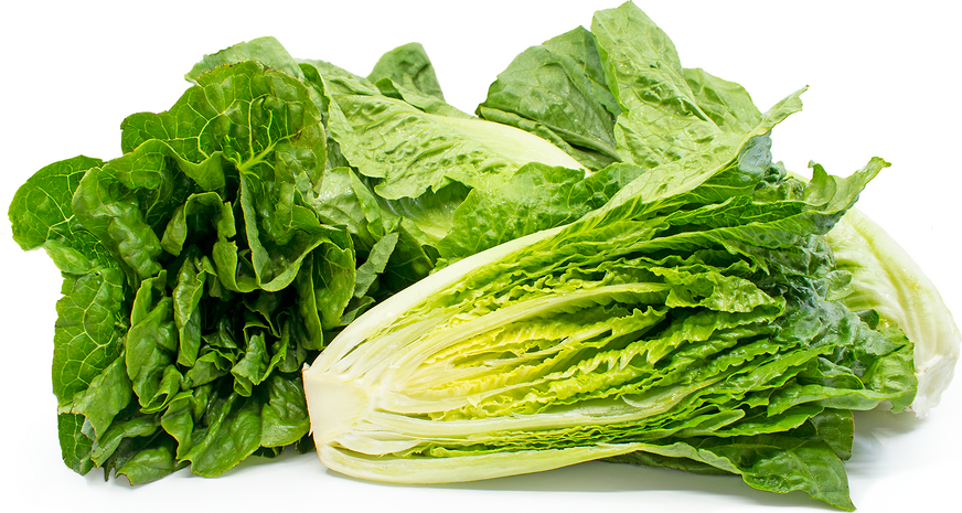 Lettuce - Romaine - Head