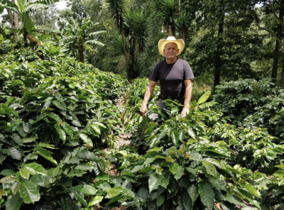 Meet Our Farmers - Pedro Fiallos