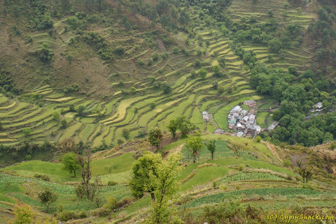 Terraced fields on the way to Nag Tibba
