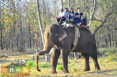 Activity Elephant Riding Travel India