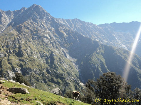 Dhauladhars enroute to Triund
