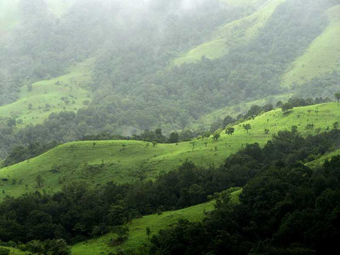 Views on a trek in Wayanad