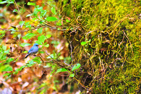 Birdwatching at Binsar Wildlife Sanctuary