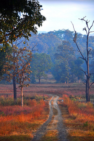 Satpura National Park in winter