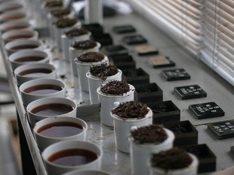 Tea tasting in Darjeeling