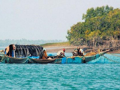 Fishing Boats in Sundarban