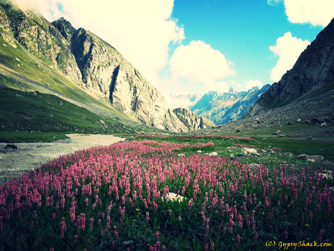 Flower strewn meadows near the Hampta Pass