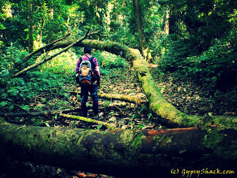 Trekking through the Namdapha Rainforest