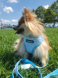 """Beach Royalty"" Harness - The Cuddly Boutique"