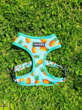"""Pineapple Party"" Harness - The Cuddly Boutique"