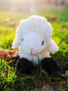 Cuddly Sheep - The Cuddly Boutique