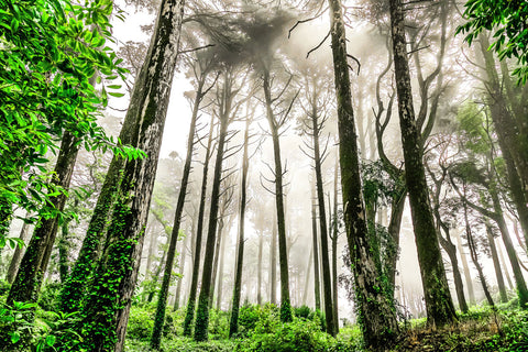 Misty forest | Portugal