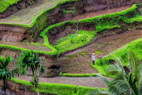 Rice terraces | Bali