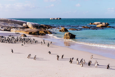 Penguins beach | South Africa
