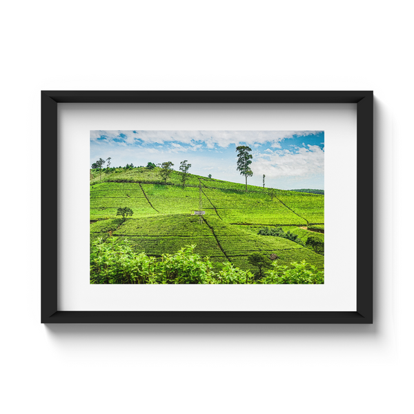 Tea plantations | Sri Lanka