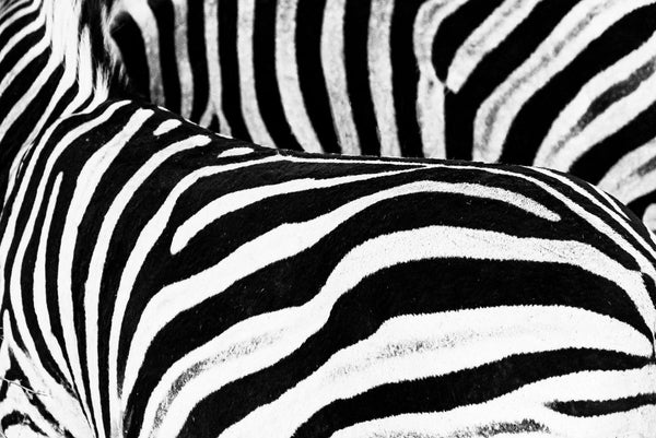 Black & white | South Africa