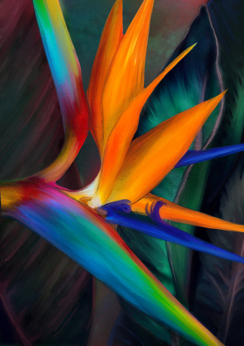 BIRD OF PARADISE - Juliana Loomer - Signed and Numbered