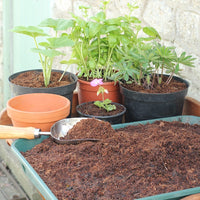 Benefits to using Recycled Coir Mulch