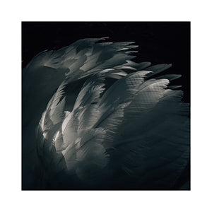 Featherlight — Fine Art Print