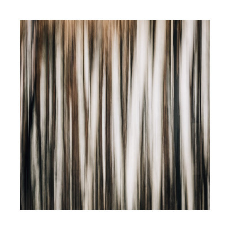 Aspens — Limited Edition Print