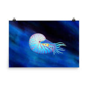 Colorful Nautilus Poster