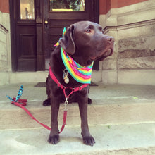 Load image into Gallery viewer, Rainbow Pride Dog Bandanna
