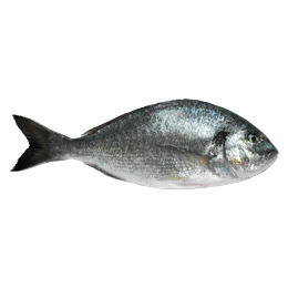 Frozen Turkish Sea Bream - Sold in 10 KG Boxes