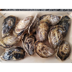 Dibba Bay Oysters - Sold in Boxes