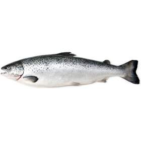 MOWI Scottish Salmon - Sold in KG