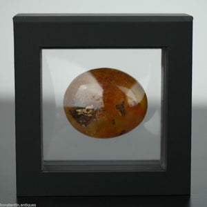 Genuine Baltic Amber polished raw stone in the display frame