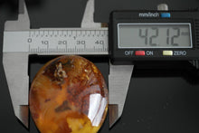 Load image into Gallery viewer, Genuine Baltic Amber polished raw stone in the display frame