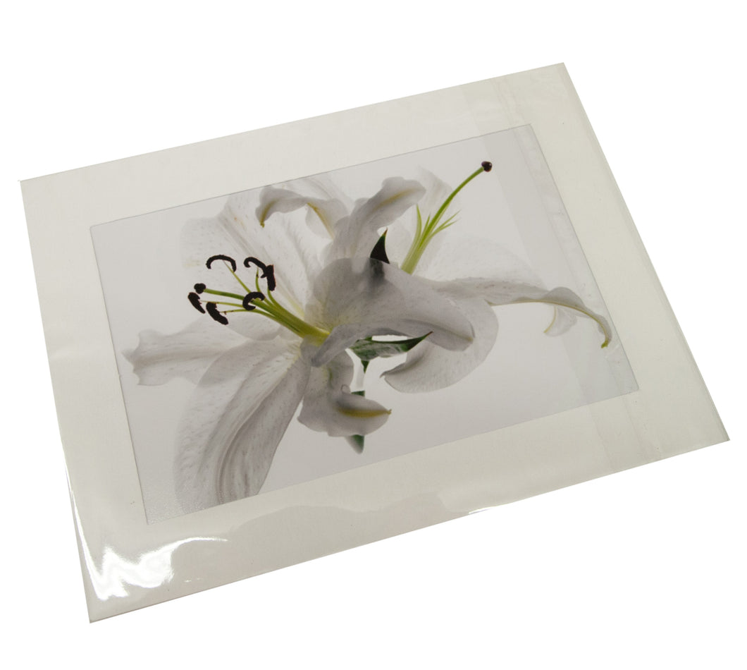 White Lilies Flower Photograph Card