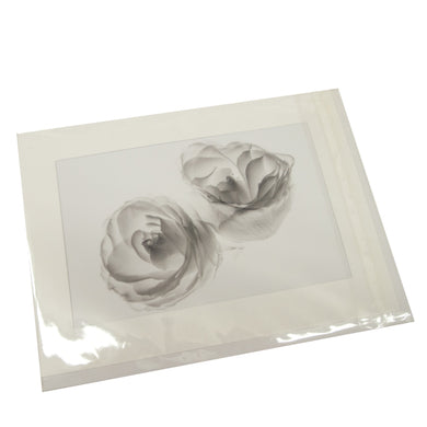 Two White Roses Photograph Card