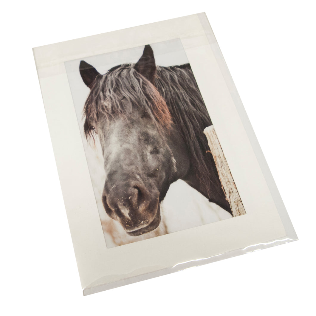 Beautiful Horse Card