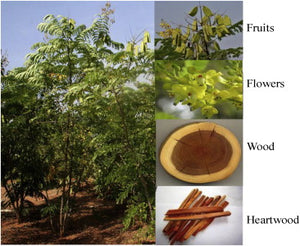 Sappanwood / Brazilwood Natural Dye Powder
