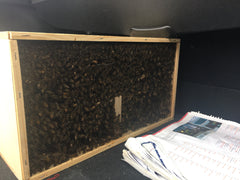 box of honey bees in back of car