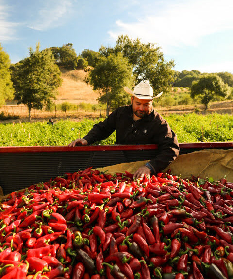 California Grown Chiles