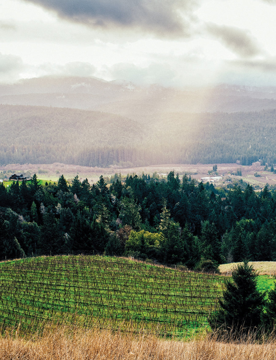 Taste of Mendocino County